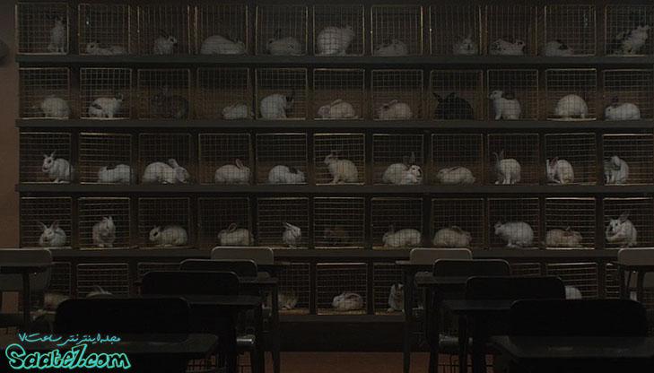 همه آنها در کنار هم جامعه ی خرگوش ها را شکل می دهند!